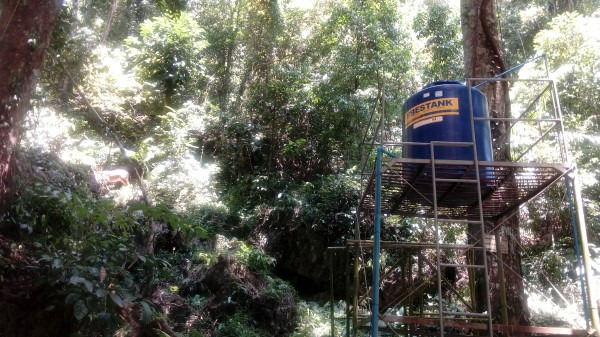 Bestank sighted at Quezon National Forest Park!